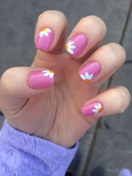Flores margaritas con fondo rosa