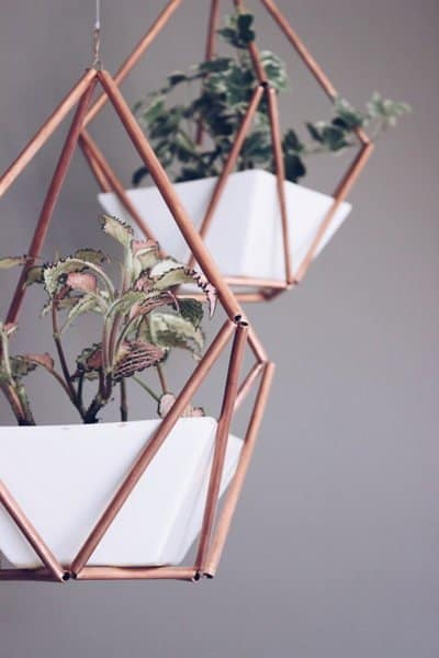 himmeli plantas de interior