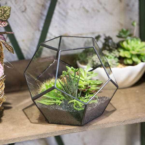 terrario-plantas-interior-suculentas