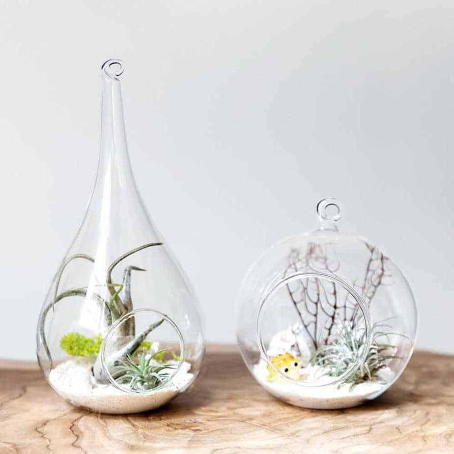 terrario-plantas-interior-suculentas-2-3