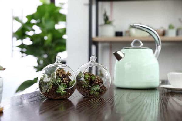 terrario-plantas-interior-suculentas-4-1