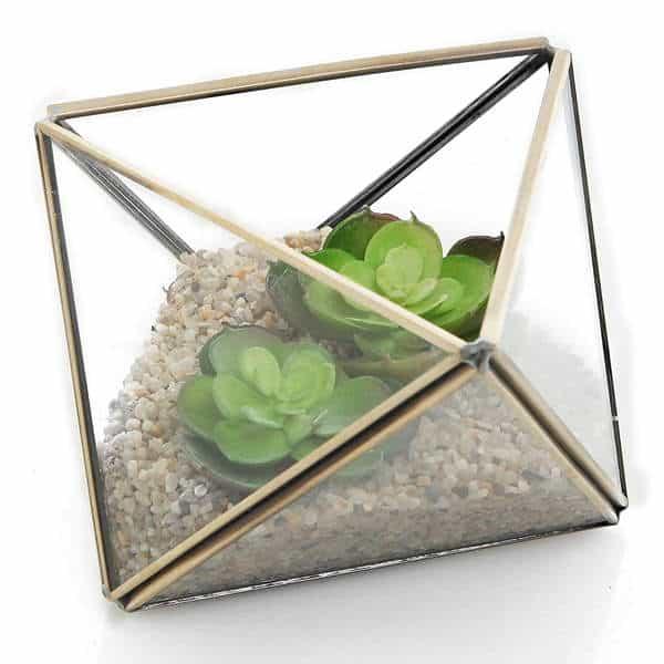 terrario-plantas-interior-suculentas-5-3
